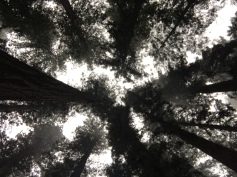 Relativity with the Redwoods